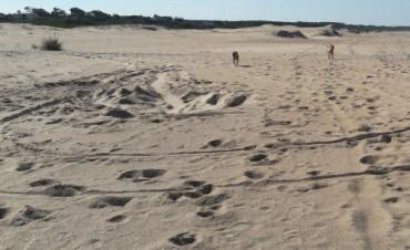 Denuncian el robo de arena