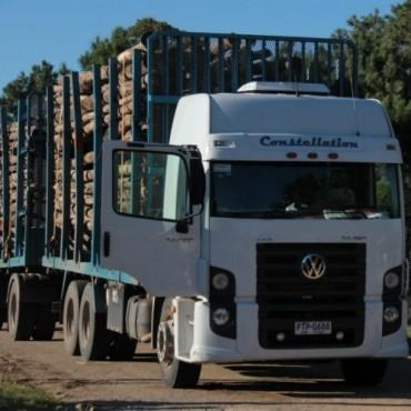 Increíble: Un Ministro dijo que los habitantes de La Paloma piden aumentar la cantidad de madera que se traslada desde el puerto
