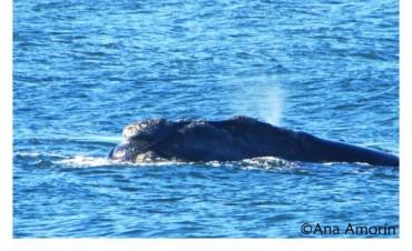 ¿Tenés fotos de ballenas?