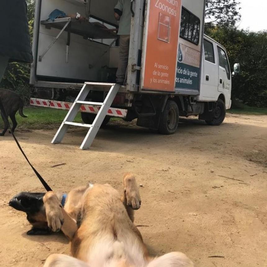 Castraron 24 perros en Anaconda