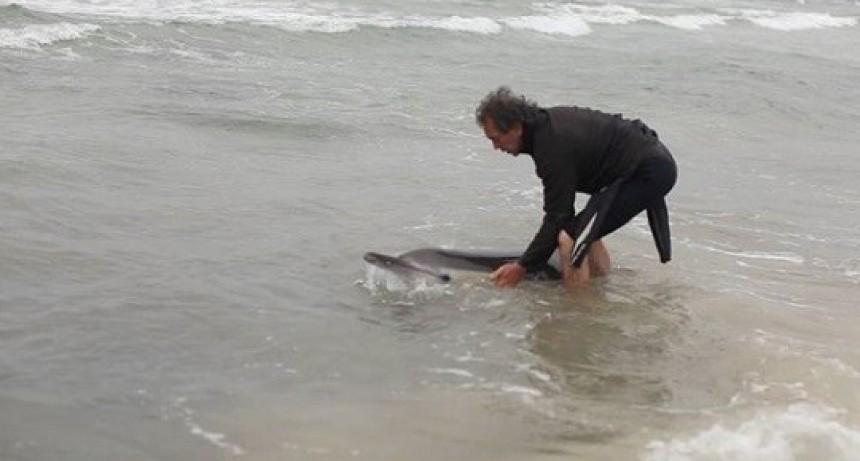 Vecinos rescatan en la playa a un delfín varado
