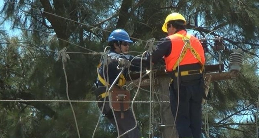 Caída de un árbol dejó varias zonas sin luz en La Paloma