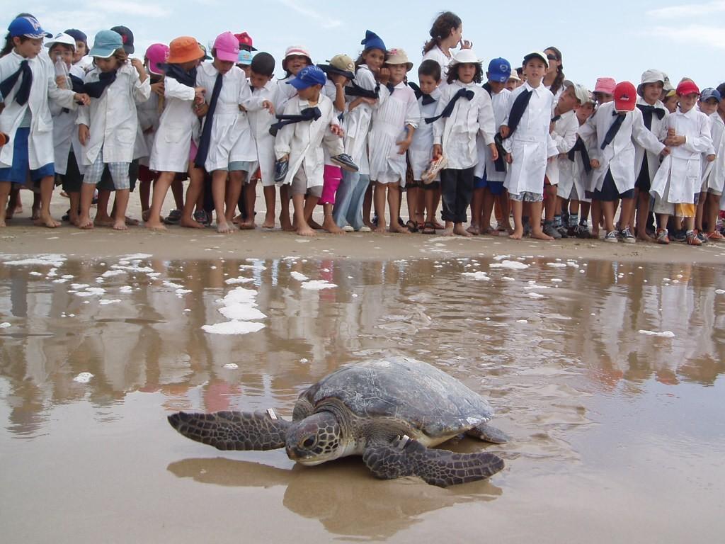 Nos asomamos al fascinante mundo de las tortugas marinas