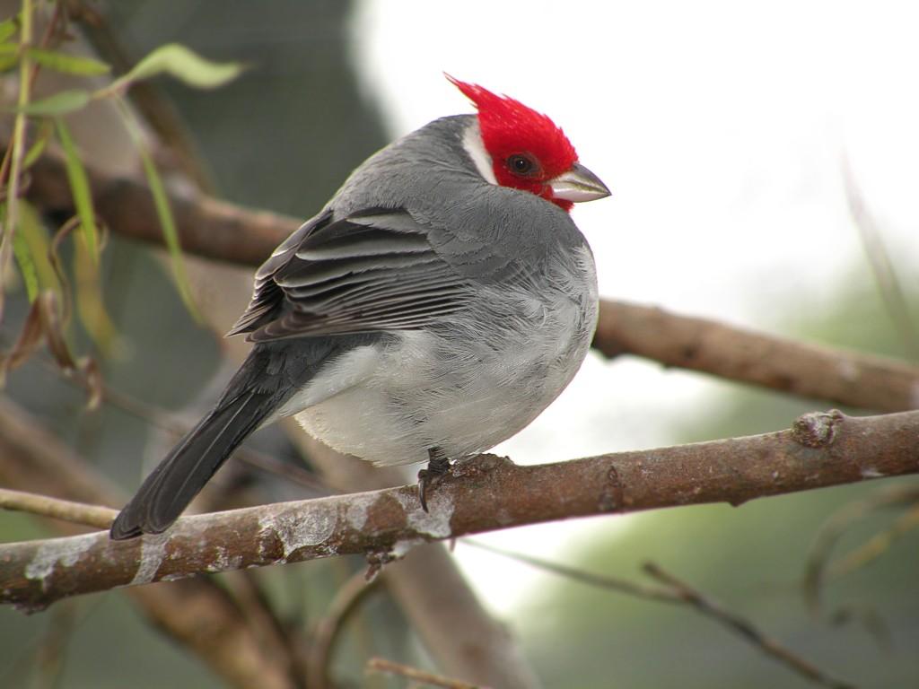 Bañados del Este, uno de los sitios más importantes para las aves en Uruguay