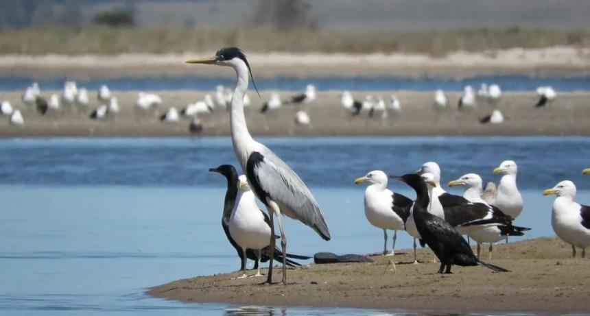 La importancia de Uruguay en el mundo de las aves