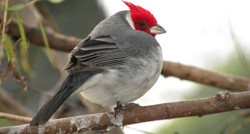 Bañados del Este es uno de los sitios más importantes para las aves en Uruguay