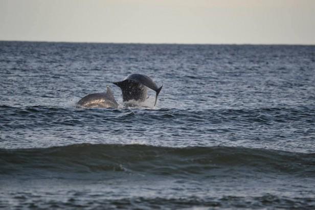 Temporada de delfines