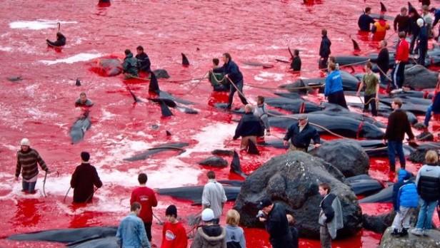 Japón seguirá pescando ballenas en el Pacífico aunque reducirá las capturas