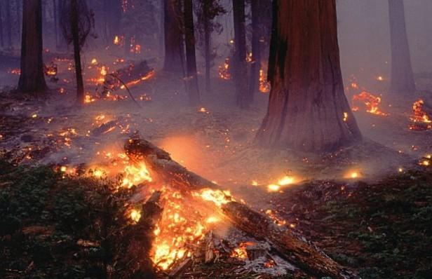 Nuevo incendio en Punta del Diablo