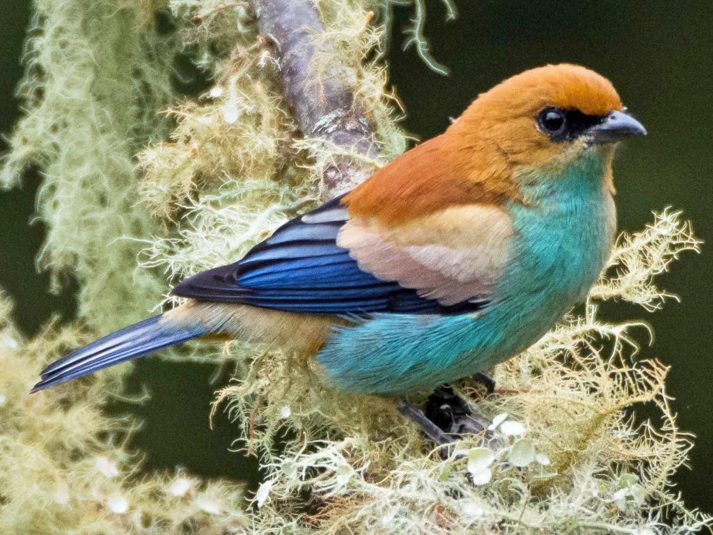 Una vuelta por la región serrana del Este y su variedad de paisajes y especies de aves