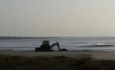 Enterraron ballena que había encallado en Arachania