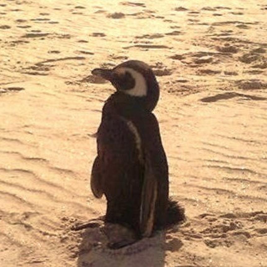 Temporada de pingüinos