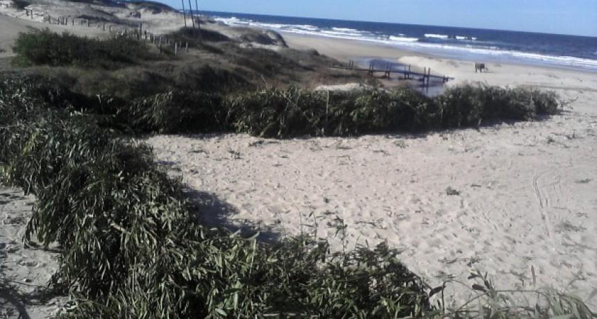 El Municipio volverá a hacer cercas captoras ante la pérdida de arena en las playas