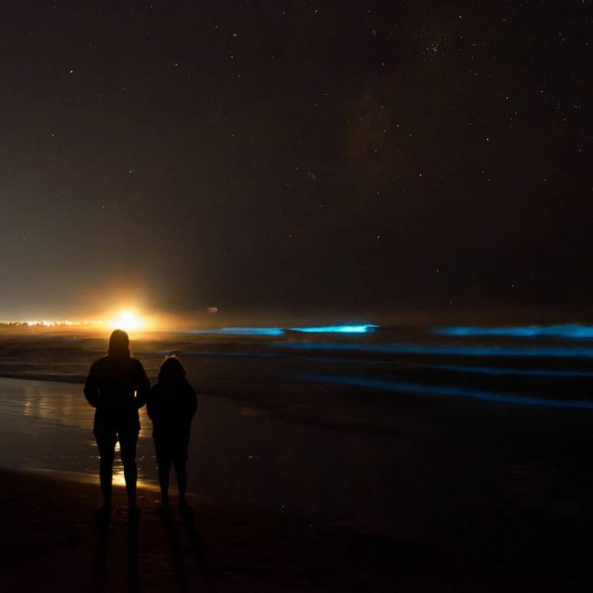 Noche de noctilucas en la costa de Rocha