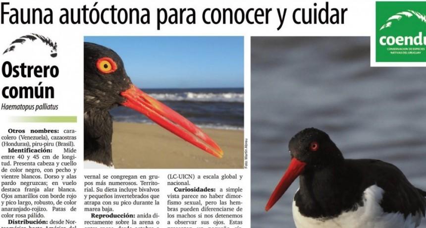 Las fichas educativas de Coendu llegan a La Paloma Hoy