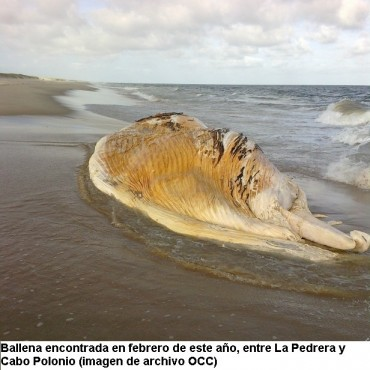 Para el gobierno es normal la cantidad de ballenas muertas