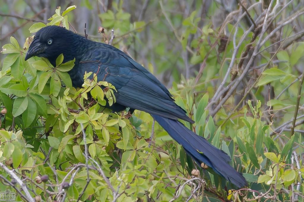 Registran en La Pedrera a un ave poco común en la zona