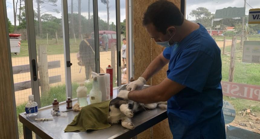 Jornada de castraciones de perros