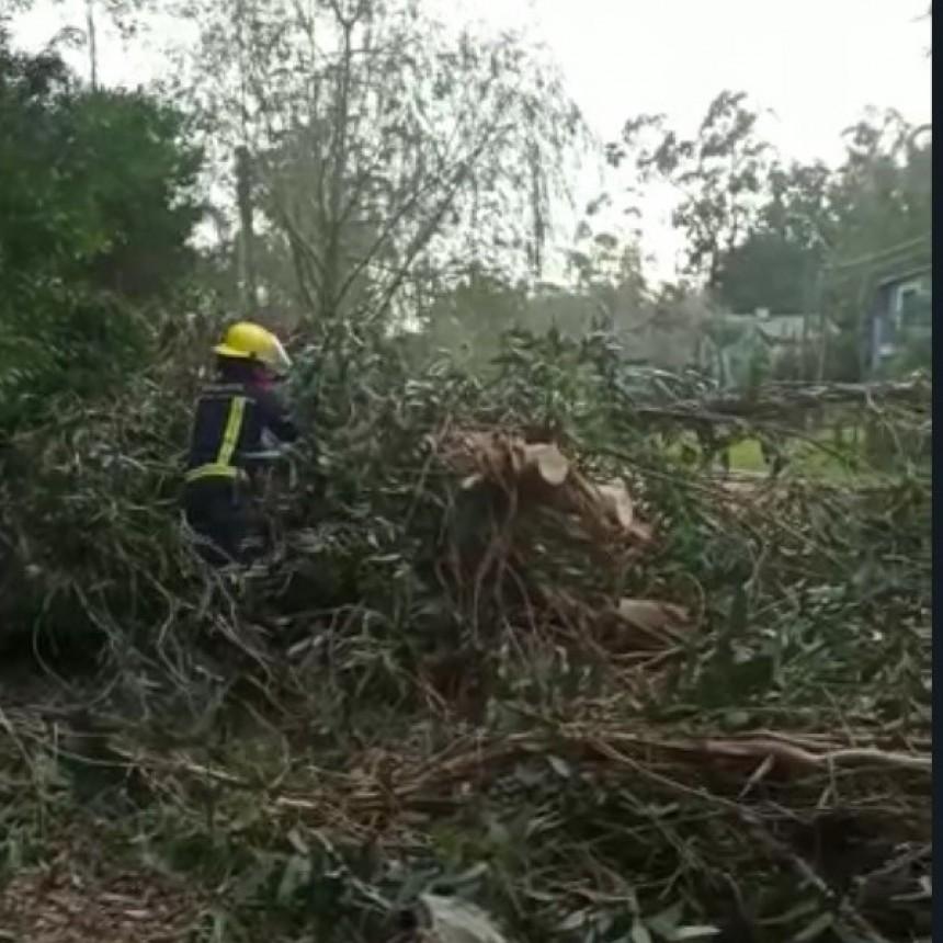 Rachas de 75 km/h provocaron caída de árboles en varias zonas