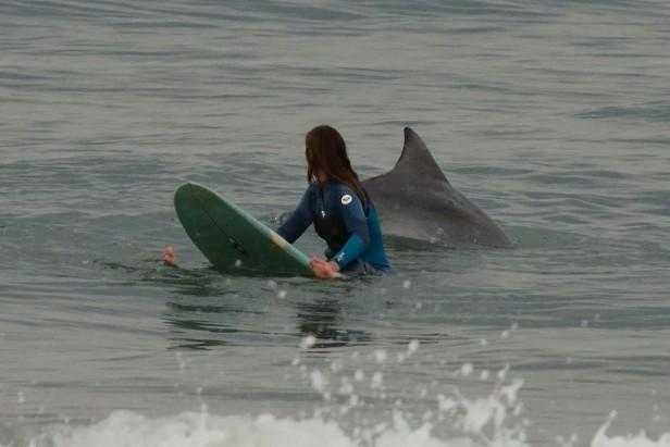 Una de delfines y surfistas
