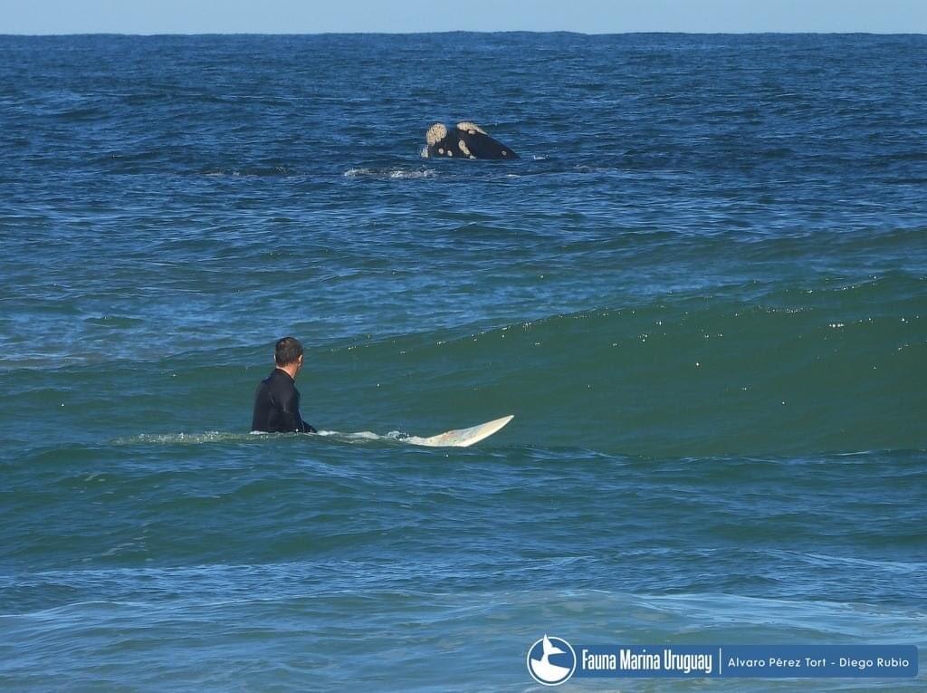 Concurso de cortos: La Paloma capital del surf