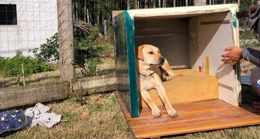 Amores perros: hacen cuchas con materiales reciclados y las donan