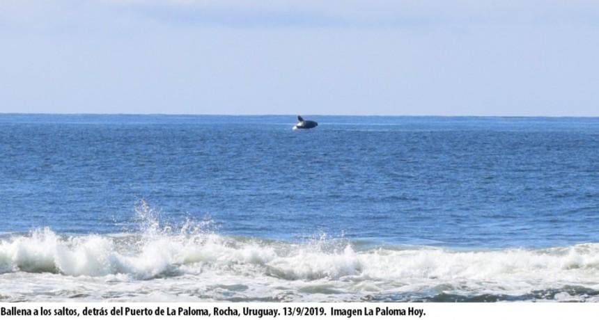 Fiesta de ballenas en La Paloma
