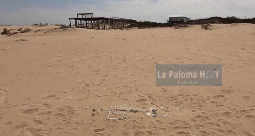Investigan la aparición de huesos en Playa Serena