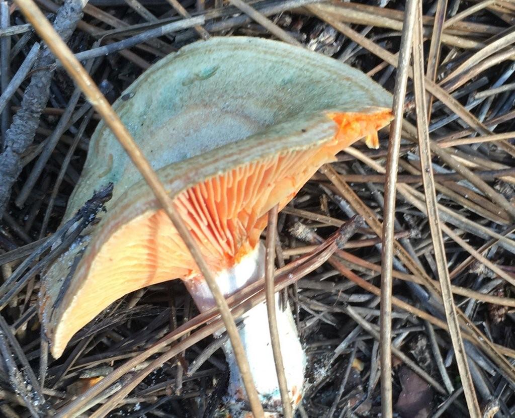 Taller de reconocimiento de hongos y micosendero
