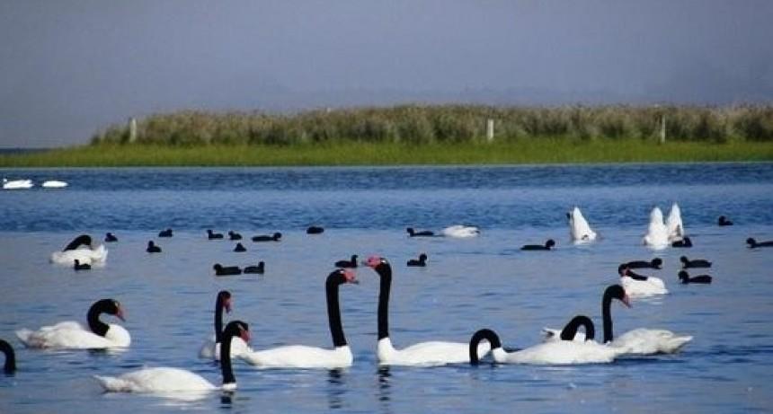 Presentan proyecto para limpieza y mejoras en las lagunas de Rocha y Garzón