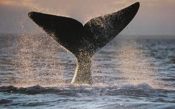 Ballenas: Con la