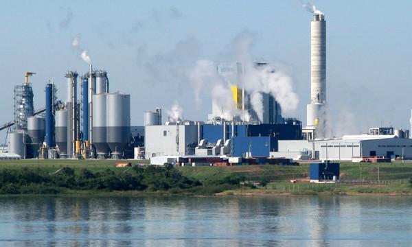 Determinaron que UPM utiliza y también arroja endosulfán al río Uruguay, pese a su prohibición