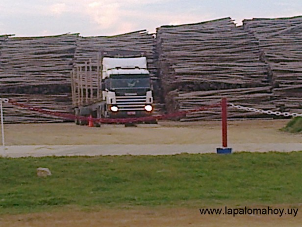 ¿Sale o no sale el primer embarque de madera del puerto de La Paloma?