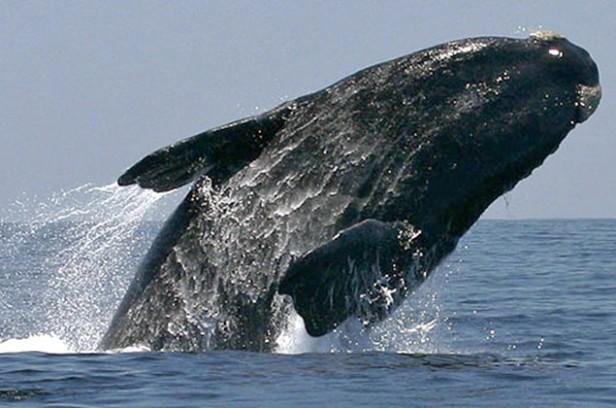 Uruguay creó santuario de ballenas y delfines en sus aguas jurisdiccionales