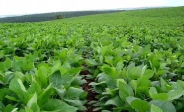 Preparan ley para rotar los cultivos e impedirán que se cultive soja de forma prolongada