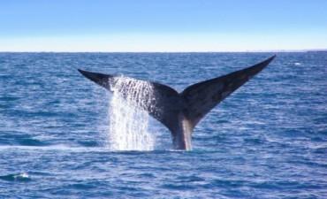 Lanzamiento temporada de ballenas